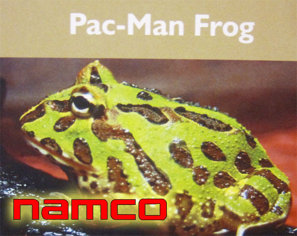 the Pac-Man Frog